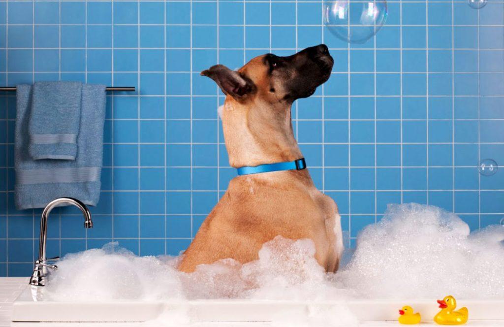 cane nella vasca che si lava