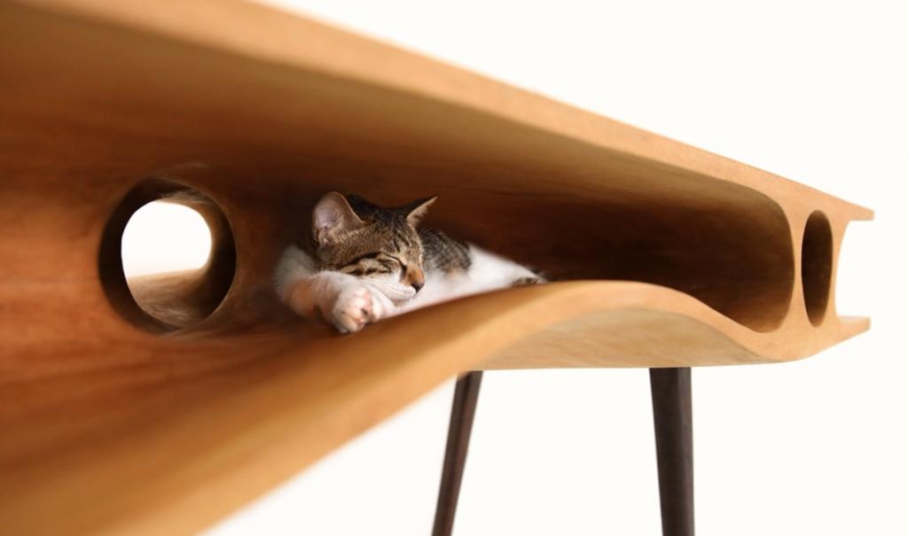 gatto che dorme sopra tavolo